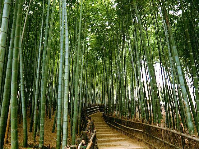 Arredare con il bamb lampadari letti e mobili etnici for Bamboo coltivazione