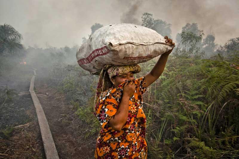 Olio di palma distrugge foreste