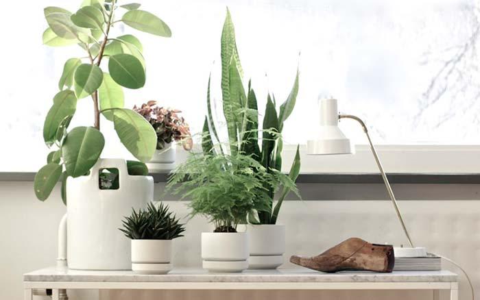 Arredare con le piante da interno una scelta eco friendly - Piante da ufficio resistenti ...